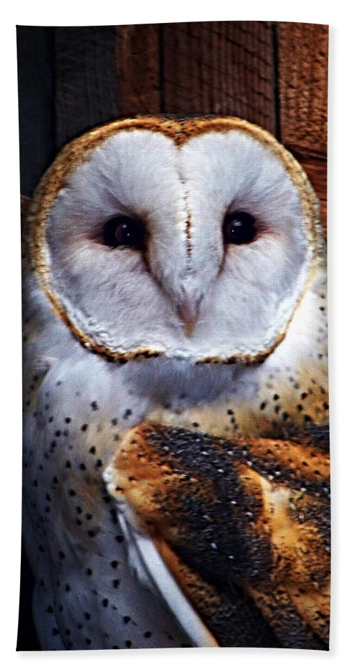 Digital Painting Bath Towel featuring the photograph Barn Owl by Anthony Jones