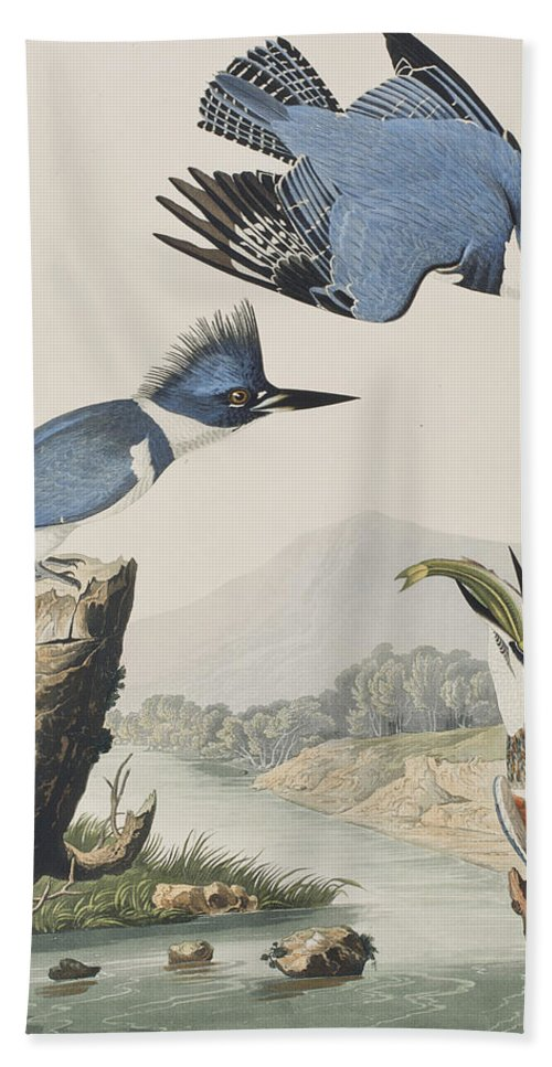 Belted Kingfisher Hand Towel featuring the painting Belted Kingfisher by John James Audubon