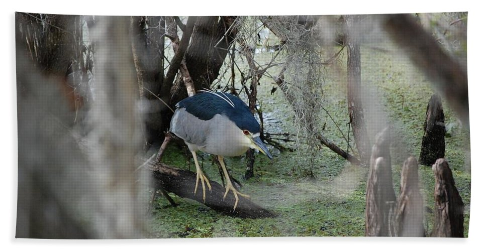 Heron Bath Towel featuring the photograph Black Crowned Night Heron by Robert Meanor