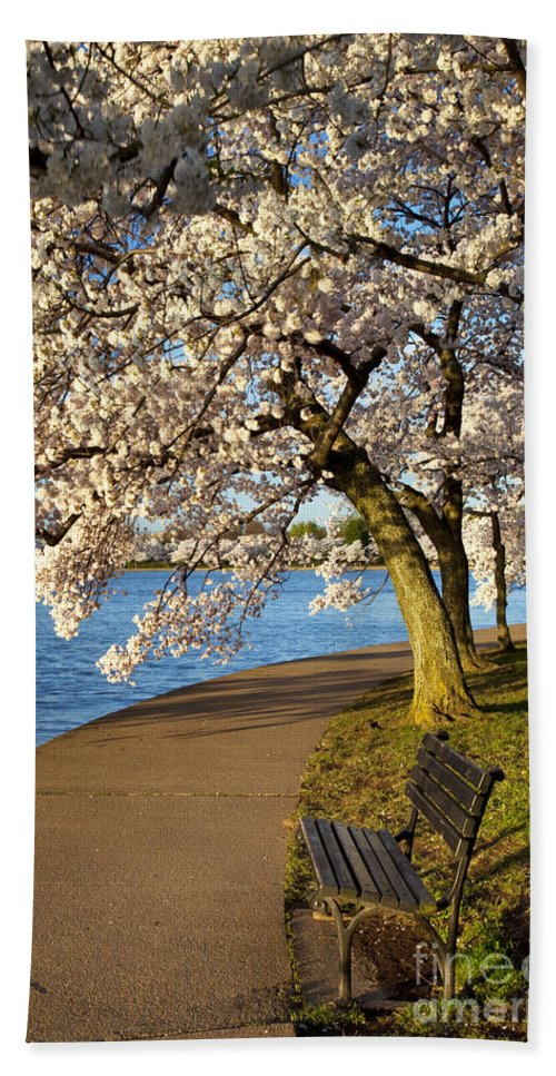 Cherry Blossom Hand Towel featuring the photograph Blossoming Cherry Trees by Brian Jannsen