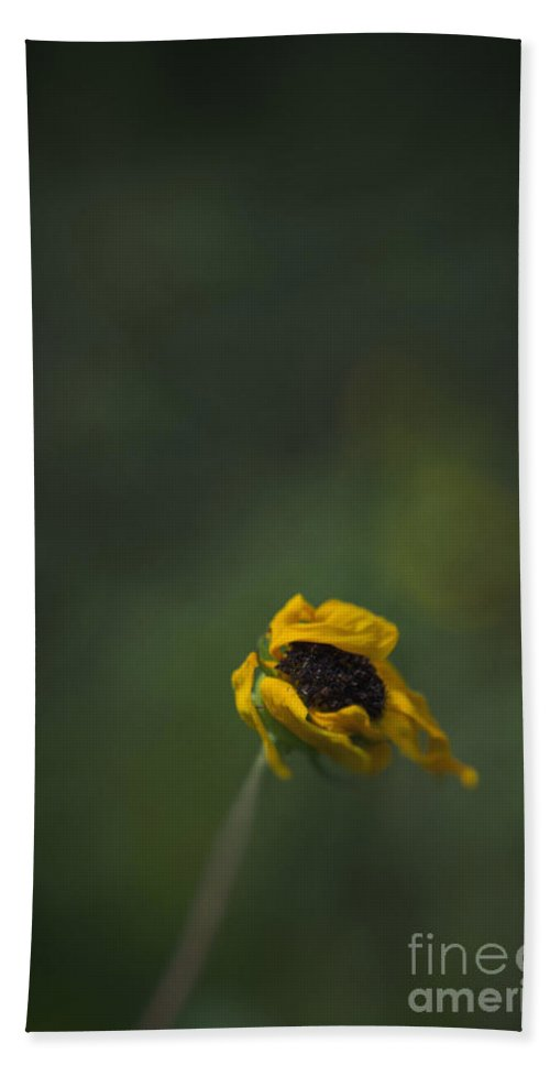 Flower Hand Towel featuring the photograph Blowing by Margie Hurwich
