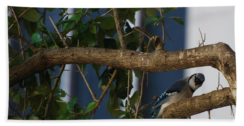 Birds Hand Towel featuring the photograph Blue Bird by Rob Hans