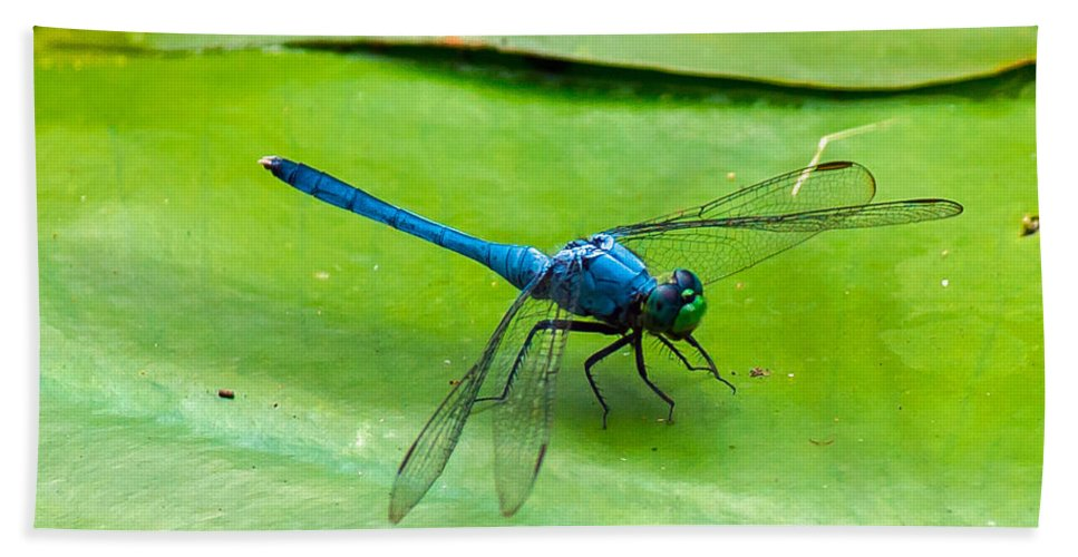 Blue Dragonfly Bath Sheet featuring the photograph Blue Dragonfly On Lily Pad by Stephen Whalen