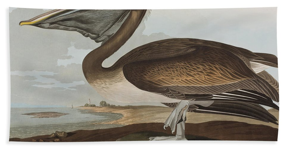 Brown Pelican Bath Towel featuring the painting Brown Pelican by John James Audubon