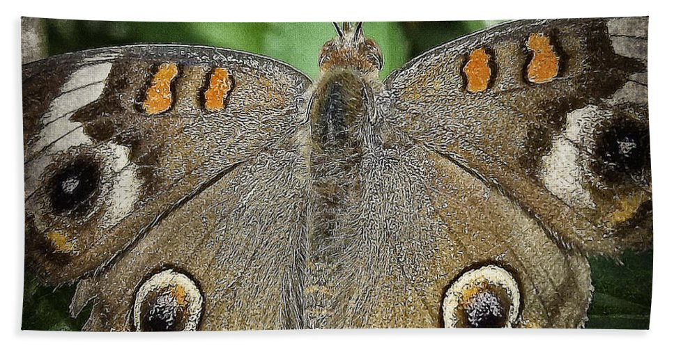 Butterflies Bath Sheet featuring the photograph Buckeye Butterfly by Ingrid Smith-Johnsen
