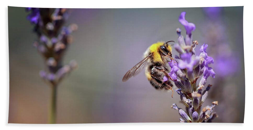 Lavender Bath Towel featuring the photograph Bumblebee And Lavender by Nailia Schwarz