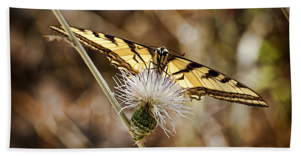 Butterfly Bath Sheet featuring the photograph Swallowtail Butterfly by Kelley King