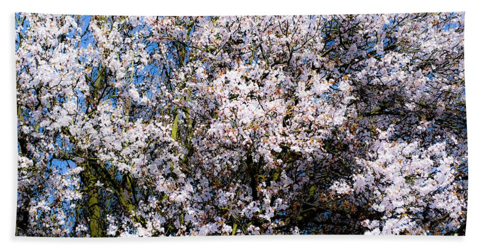 Flower Hand Towel featuring the photograph Cherry Blossom Tree by Svetlana Sewell