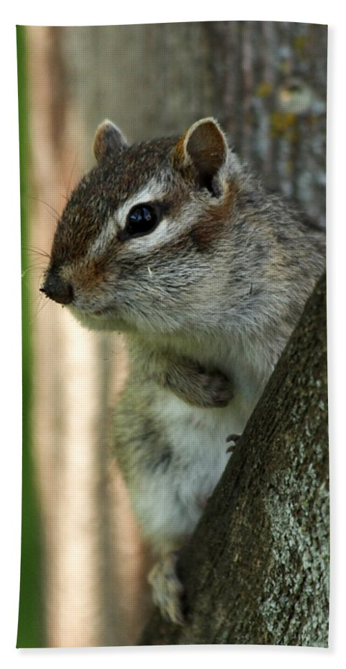 Chipmunk Hand Towel featuring the photograph Chipmunk by Lori Tordsen