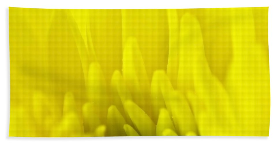Blossom Hand Towel featuring the photograph Chrysanthemum by Svetlana Sewell