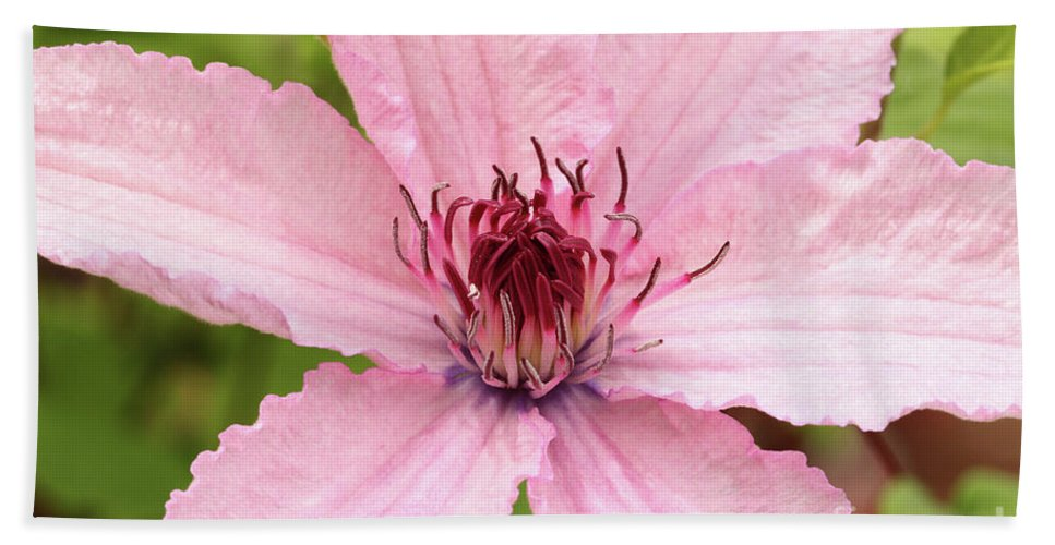 Clematis Bath Sheet featuring the photograph Clematis Hagley Hybrid by Judy Whitton
