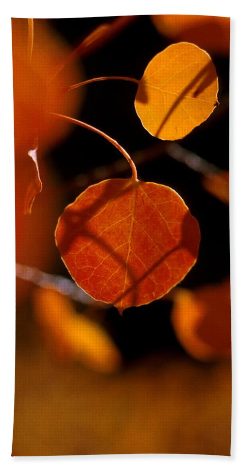 Fall Colors Hand Towel featuring the photograph Colorado Gold by Jerry McElroy