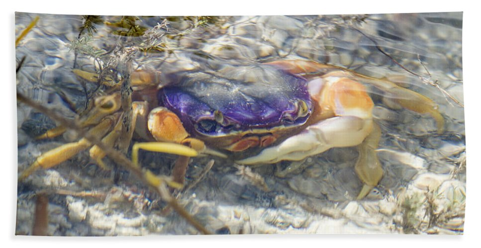 Crab Bath Sheet featuring the photograph Colorful Crabstract 2 by Carol McArdle