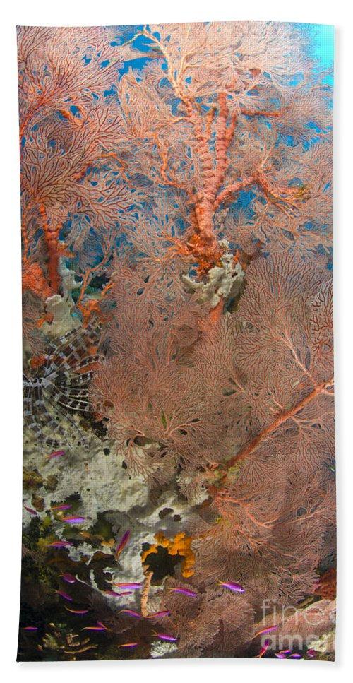 Anthozoa Bath Sheet featuring the photograph Colourful Sea Fan With Crinoid, Papua by Steve Jones