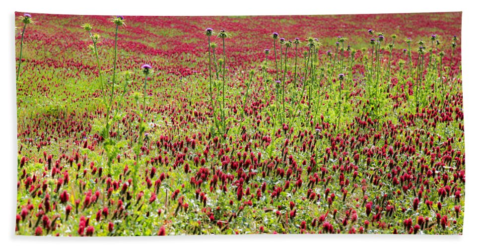 Red Bath Sheet featuring the photograph common sainfoin Onobrychis viciifolia by Vladi Alon