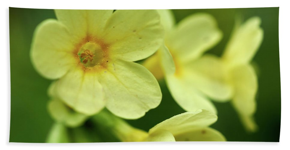 Finland Bath Sheet featuring the photograph Cowslip by Jouko Lehto