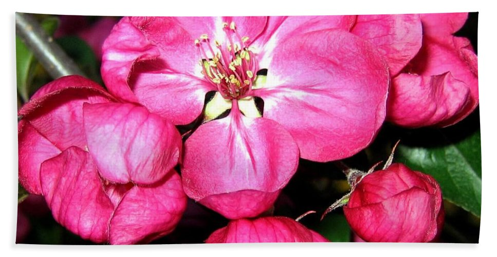 Blossoms Bath Sheet featuring the photograph Crab Apple Blossoms by Will Borden