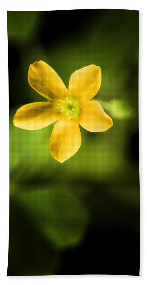 Nobody Hand Towel featuring the photograph Creeping Woodsorrel by Donald Erickson
