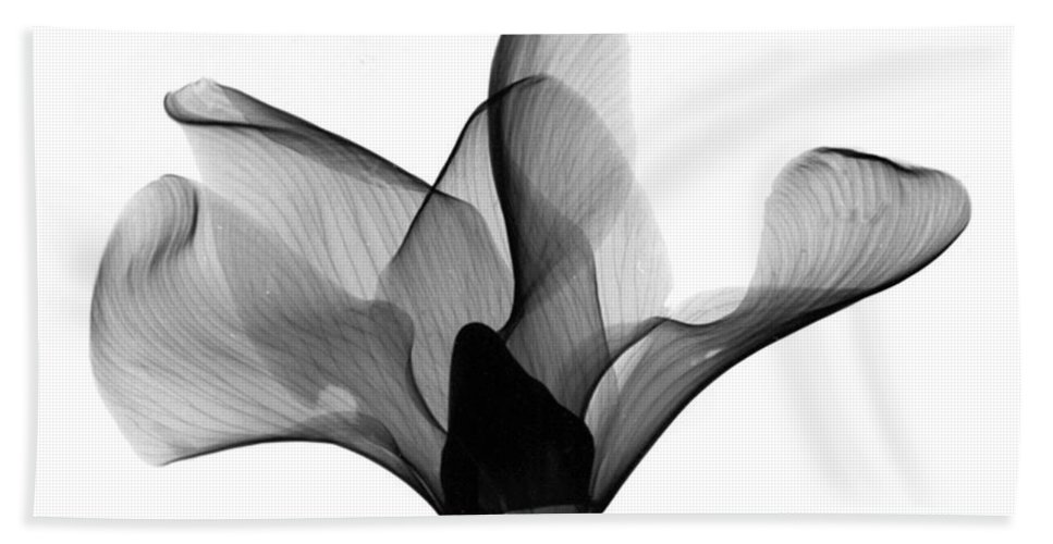 Nature Hand Towel featuring the photograph Cyclamen Flower X-ray by Bert Myers