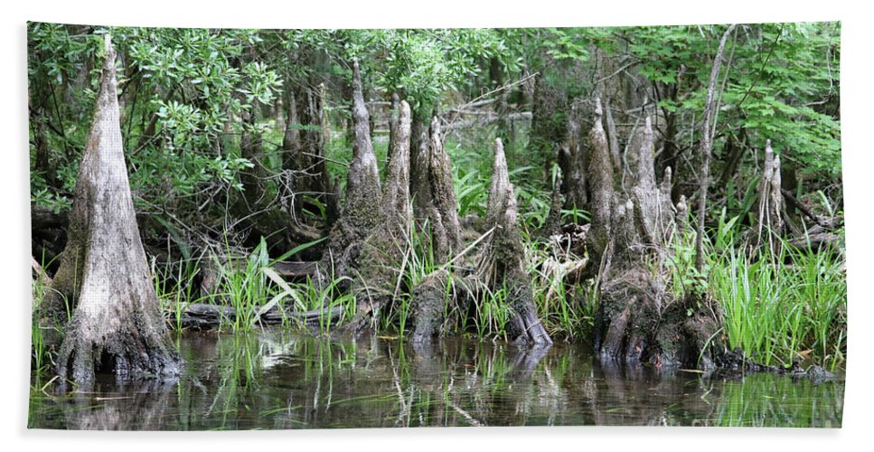 Swamps Hand Towel featuring the photograph Cypress Knees by Carol Groenen
