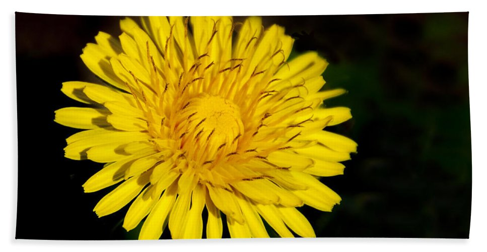 Dandelion Hand Towel featuring the photograph Dandelion by Steven Natanson