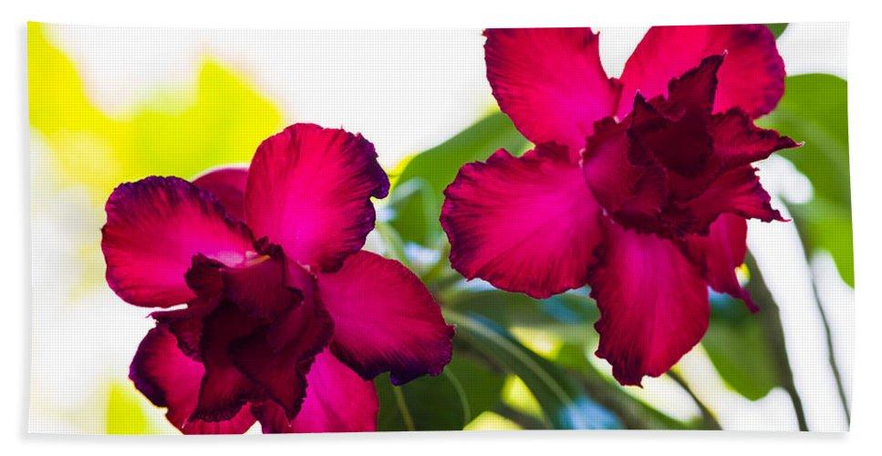 Beautiful Bath Sheet featuring the photograph Desert Rose by Raul Rodriguez