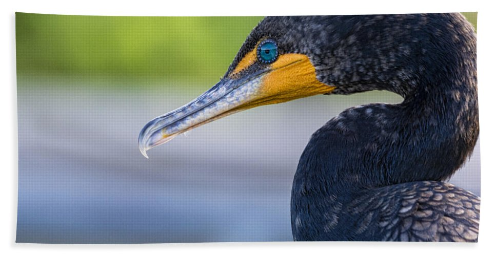 Double-crested Cormorant Bath Towel featuring the photograph Double-crested Cormorant by Saija Lehtonen