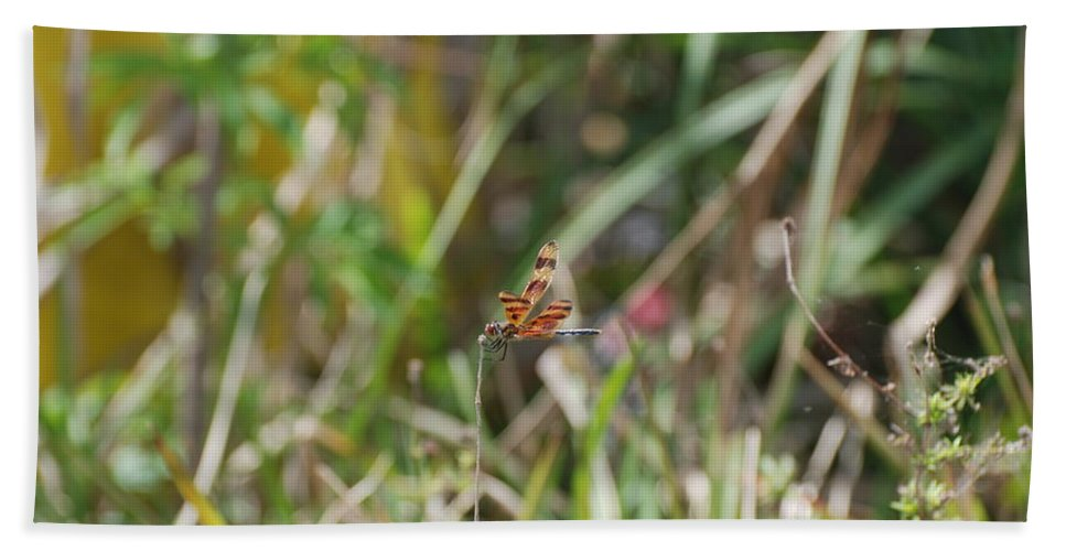 Nature Hand Towel featuring the photograph Dragon Fly by Rob Hans
