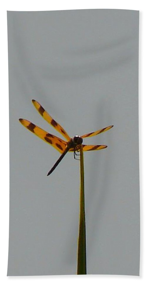Dragonfly Hand Towel featuring the photograph Dragonfly by Carl Moore