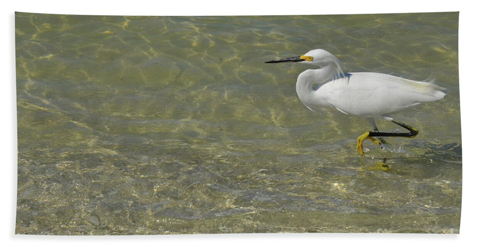 Egret Bath Sheet featuring the photograph Eastern Great Egret In Florida by DejaVu Designs
