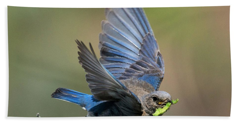 Bluebird Bath Sheet featuring the photograph Eat Your Greens by Mike Dawson