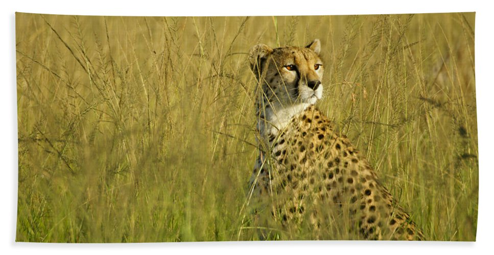 Africa Hand Towel featuring the photograph Elegant Cheetah by Michele Burgess