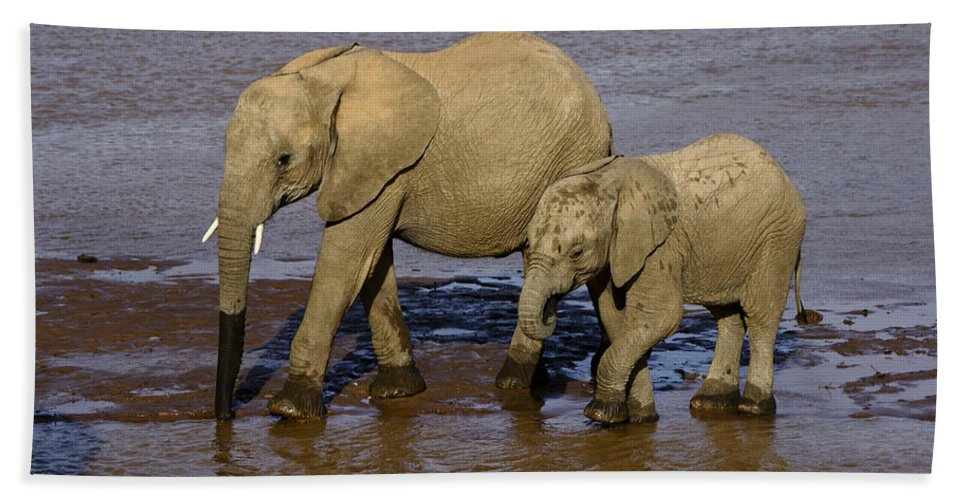 Africa Hand Towel featuring the photograph Elephant Crossing by Michele Burgess