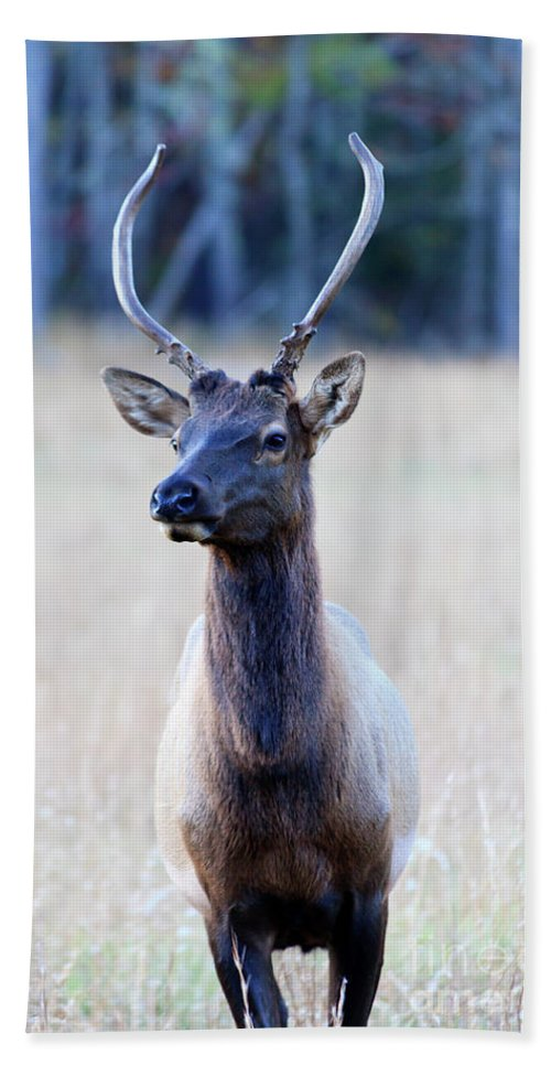 Elk Hand Towel featuring the photograph Elk by Jill Lang