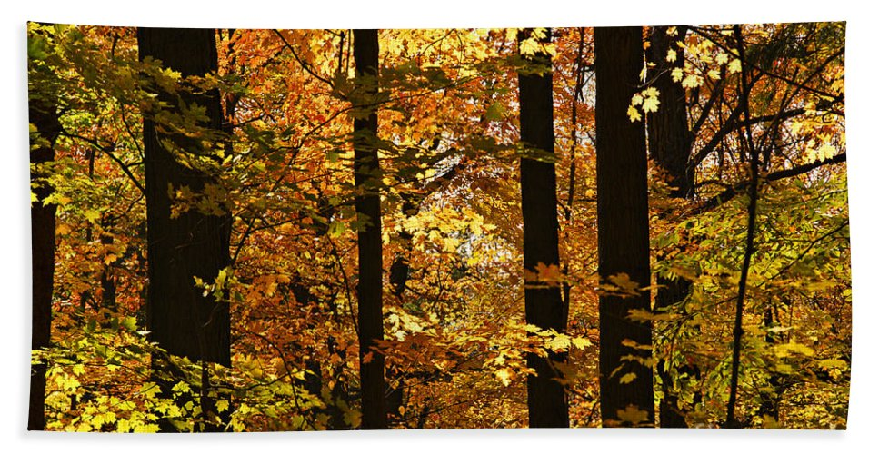 Fall Hand Towel featuring the photograph Fall Forest by Elena Elisseeva
