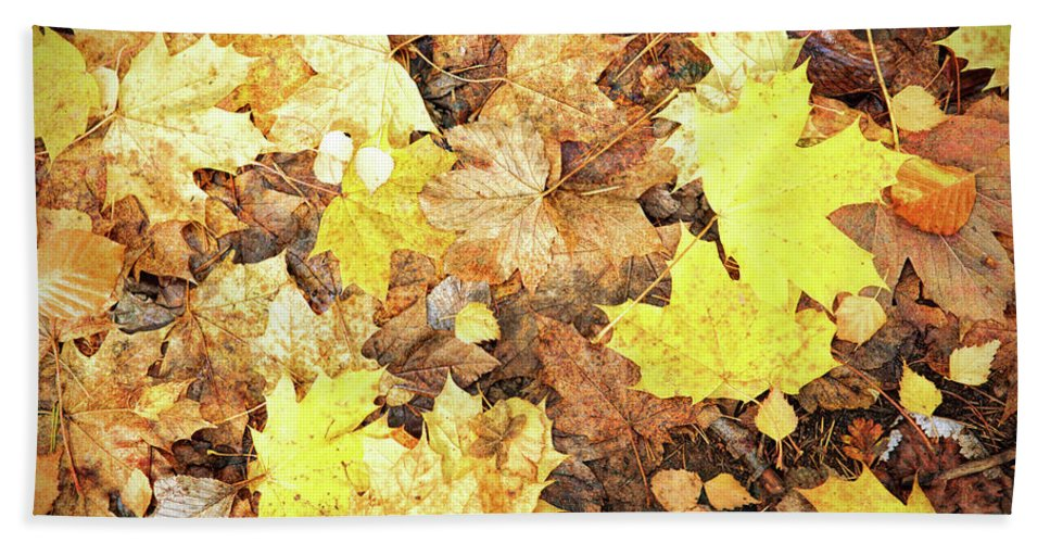 Autumn Hand Towel featuring the photograph Fallen Leaves by Roy Pedersen