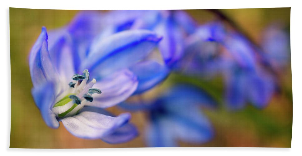 Spring Flowers Bath Sheet featuring the photograph First Spring Flowers by Lilia D