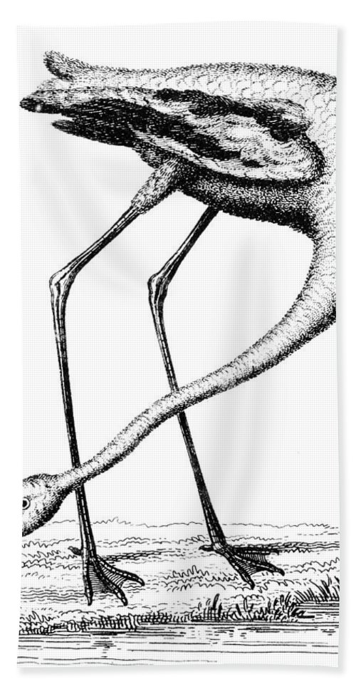 Biology Bath Sheet featuring the photograph Flamingo by Granger