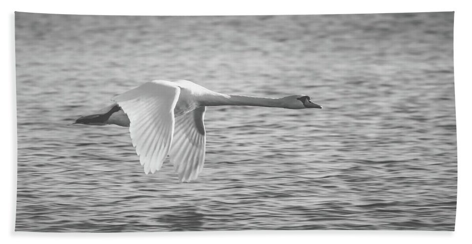 Swan Bath Sheet featuring the photograph Flight Of The Swan by Pixabay