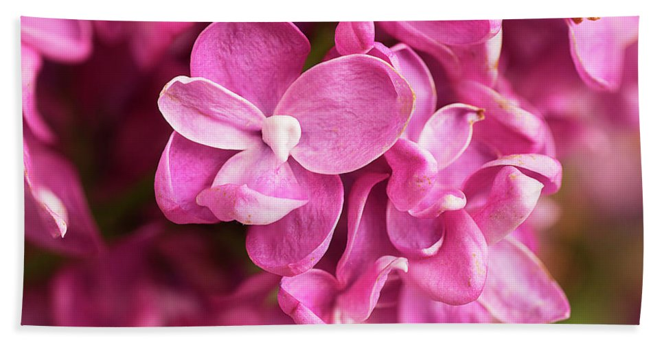 Flowers Bath Sheet featuring the photograph Flowers - Freshly Cut Lilacs by Donald Erickson