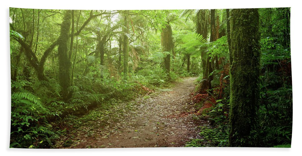Rain Forest Hand Towel featuring the photograph Forest Walking Trail 1 by Les Cunliffe