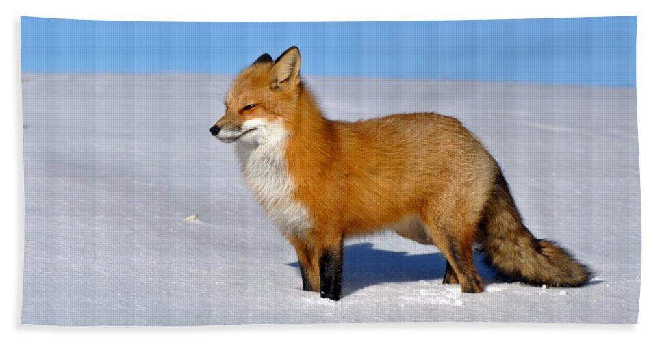 Fox Bath Sheet featuring the digital art Fox by Bert Mailer