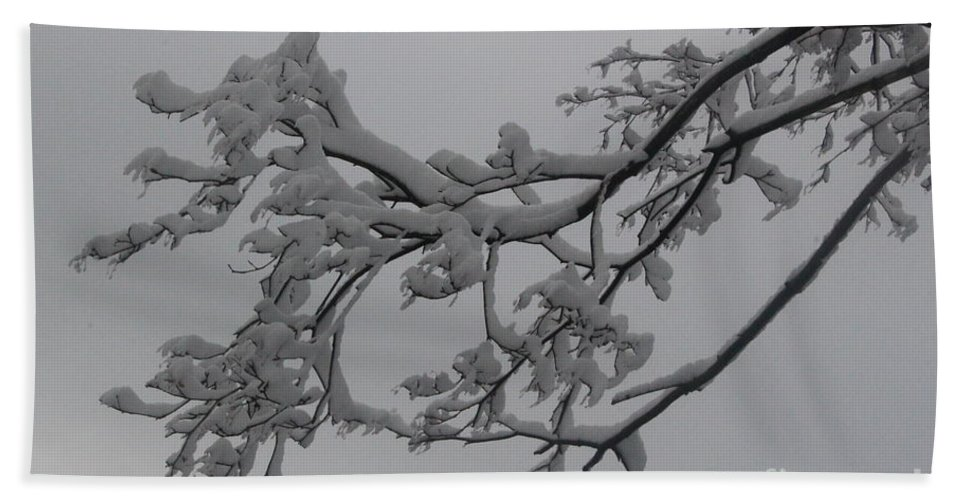Winter Bath Sheet featuring the photograph Fresh Snow On Magnolia Tree by Dora Sofia Caputo Photographic Design and Fine Art