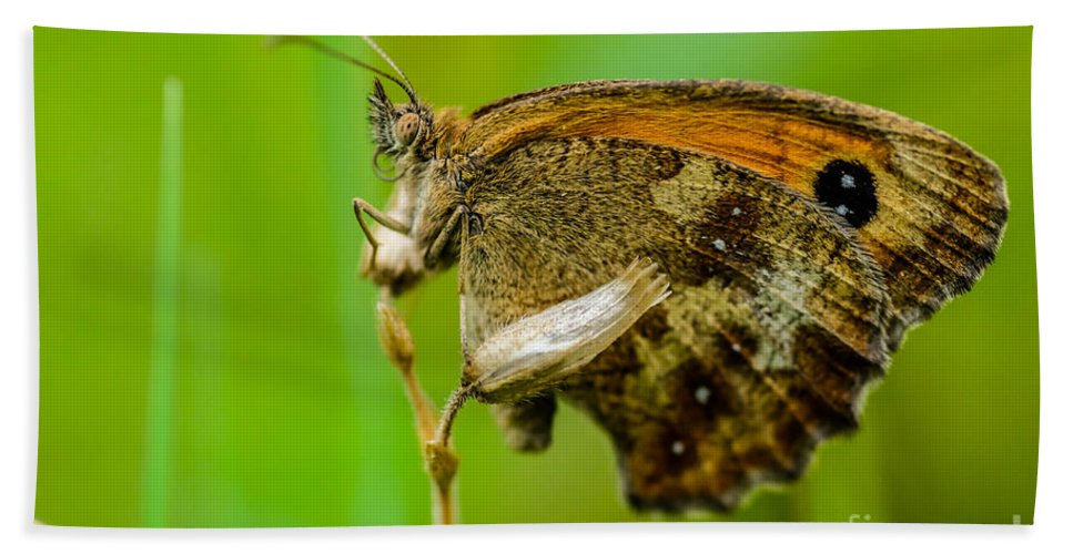 Butterfly Bath Sheet featuring the photograph Gatekeeper by Brothers Beerens