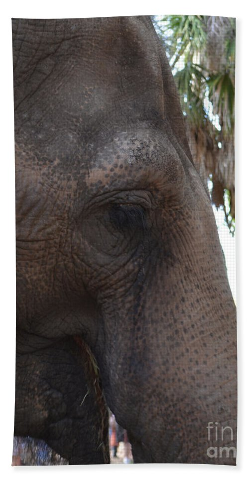 Elephant Hand Towel featuring the photograph Gentle Giant by To-Tam Gerwe