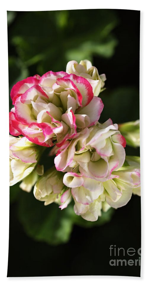 Bubbleblue Bath Sheet featuring the photograph Geranium Flowers by Joy Watson