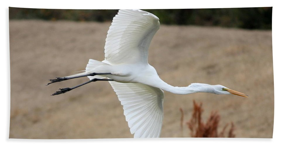 Egret Hand Towel featuring the photograph Gliding by Carol Groenen