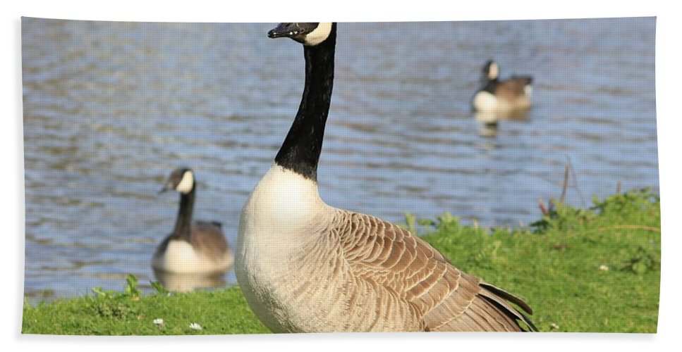 Goose Hand Towel featuring the photograph Goose by FL collection