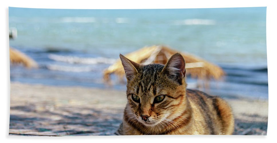 Animal Bath Sheet featuring the photograph Gray Cat On The Background Of The Sea 1 by Viktor Birkus