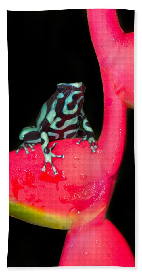 Photography Bath Sheet featuring the photograph Green And Black Poison Dart Frog by Panoramic Images